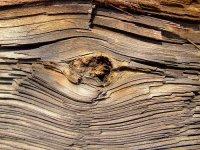 szkodniki drewna